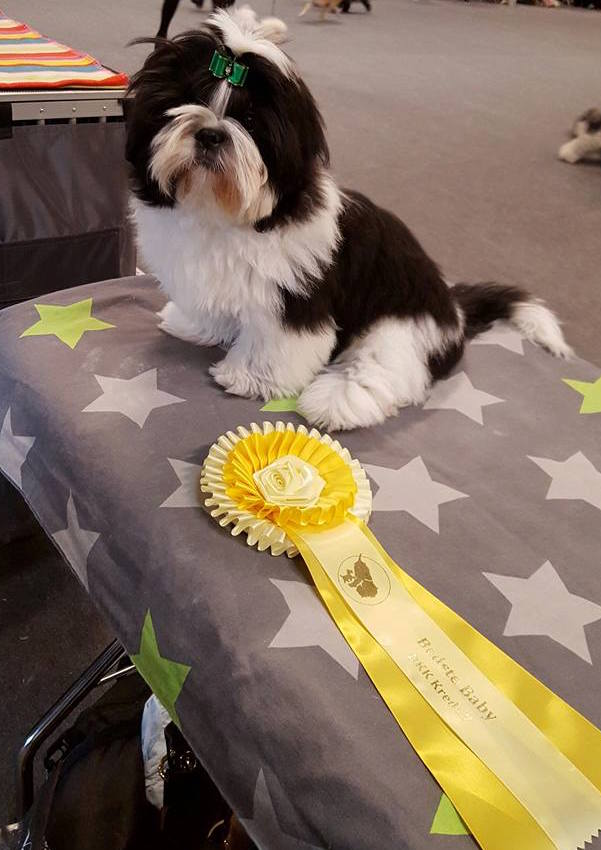 Happy Noise M&M's Dario BIR Baby og Best in Show Baby-3